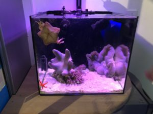 Glow fish tank