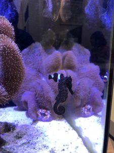 Sea Horse in Glow Tank